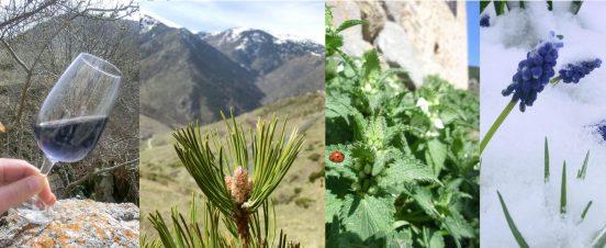 4 recettes avec les plantes